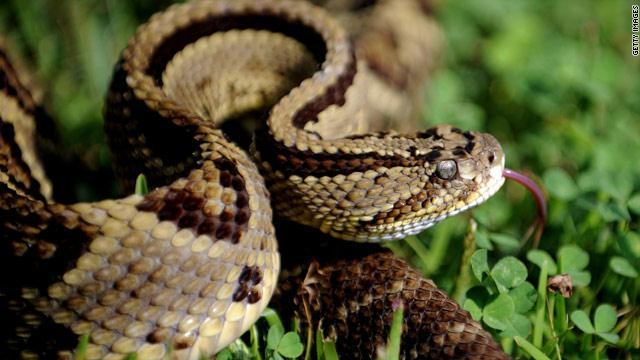 اضغط على الصورة لعرض أكبر  الاســـم:gal.snake.jpg المشاهدات:204 الحجـــم:42.1 كيلوبايت الرقم:295